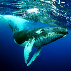 tours whales
